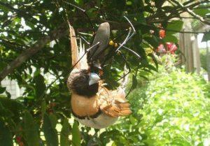 Spider Eating a Bird